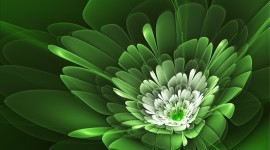 4K Green Flowers Aircraft Picture