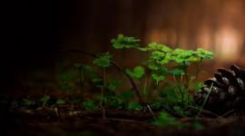 4K Green Flowers Desktop Wallpaper HD