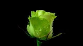 4K Green Flowers Wallpaper Free