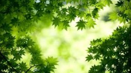 4K Green Photo Download