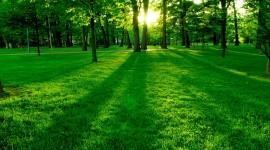 4K Green Photo Free