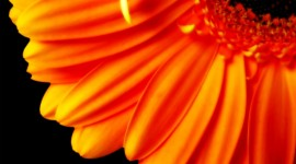 4K Orange Flowers Photo