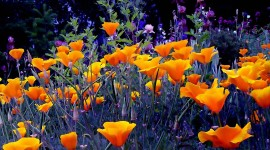 4K Orange Flowers Photo Free