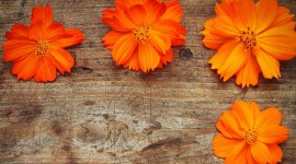 4K Orange Flowers Photo#3