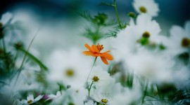 4K Orange Flowers Wallpaper Download