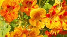 4K Orange Flowers Wallpaper Free