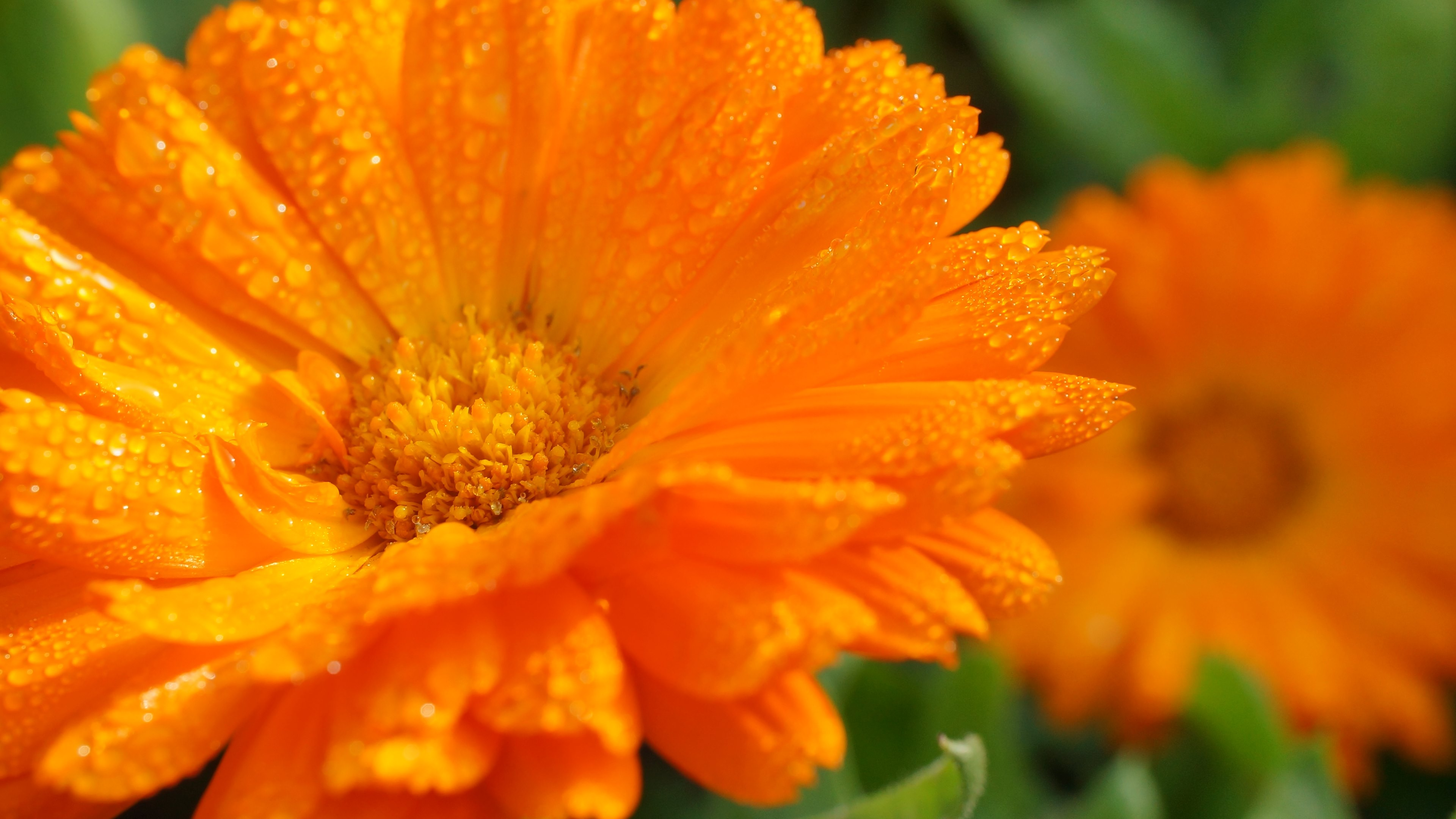 4K Orange Flowers Wallpapers High Quality