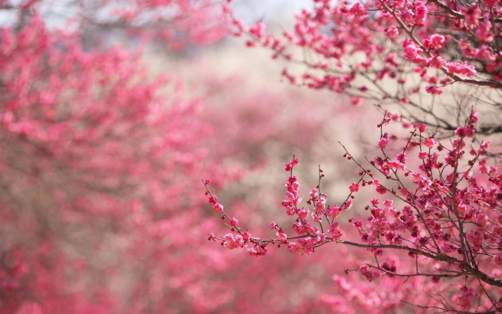 4k pink wallpapers high quality download free - Pink wallpaper 4k ...