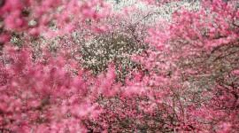 4K Pink Photo
