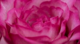 4K Pink Photo Free#3