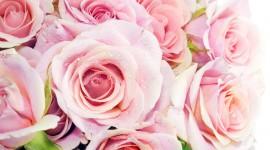 4K Pink Wallpaper Free