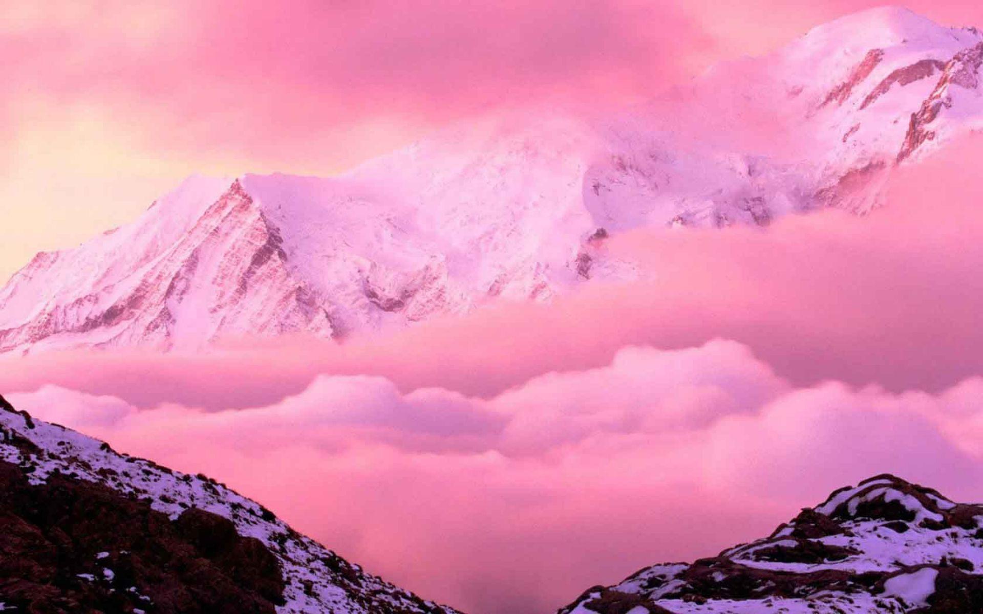 Fondos De Pantalla Rosa: 4K Pink Wallpapers High Quality