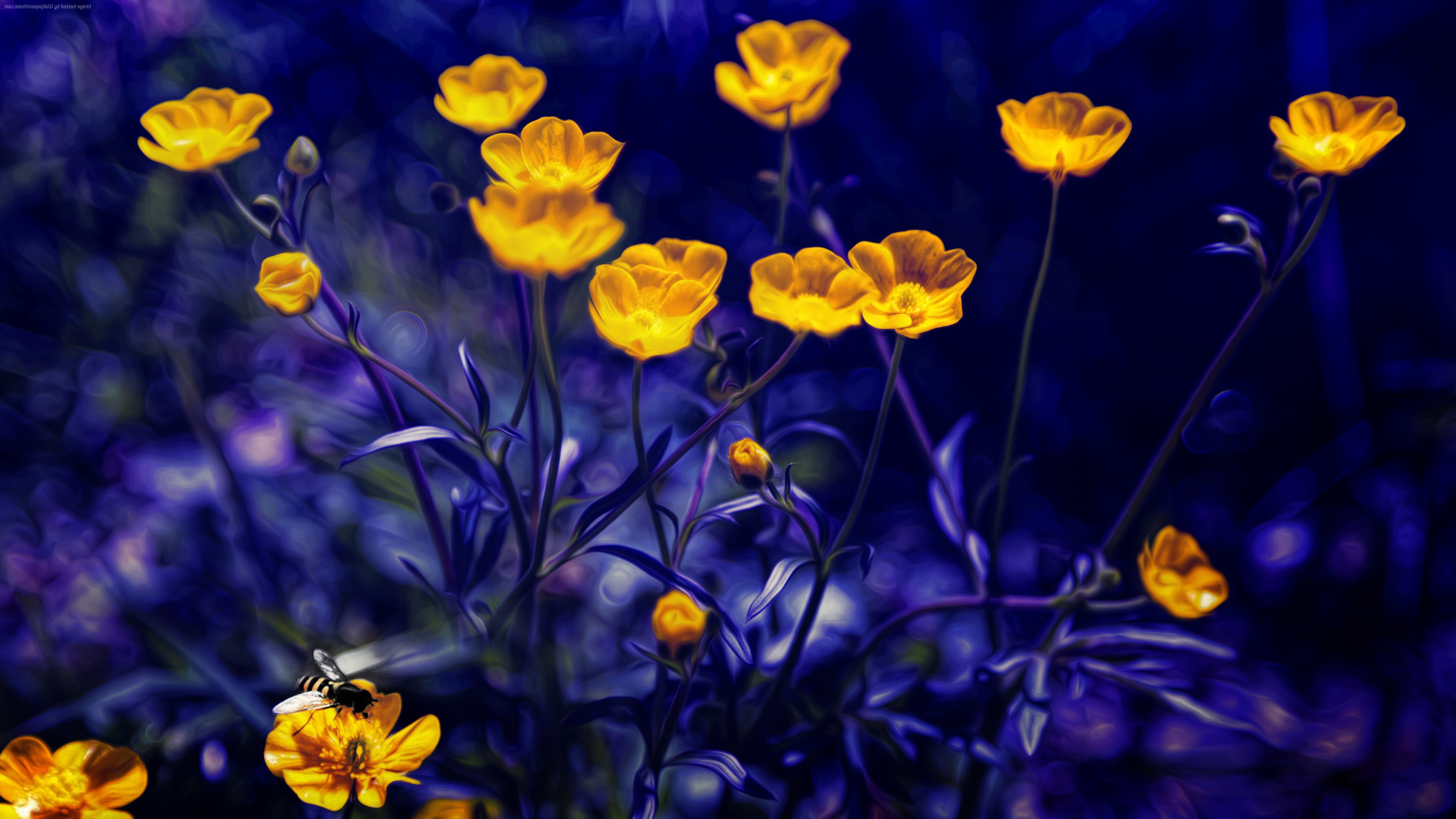 4K Yellow Wallpapers High Quality | Download Free