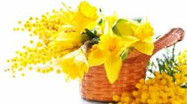 4K Yellow Flowers Best Wallpaper