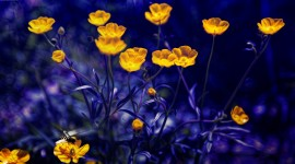 4K Yellow Flowers Desktop Wallpaper