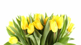 4K Yellow Flowers Desktop Wallpaper For PC