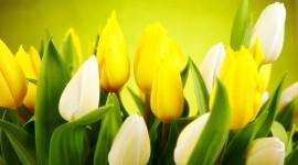 4K Yellow Flowers Desktop Wallpaper HD