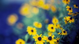 4K Yellow Flowers Photo#3