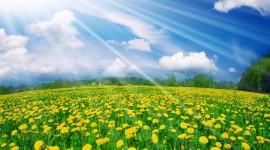 4K Yellow Flowers Pics