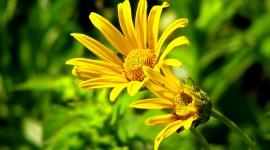 4K Yellow Flowers Wallpaper 1080p