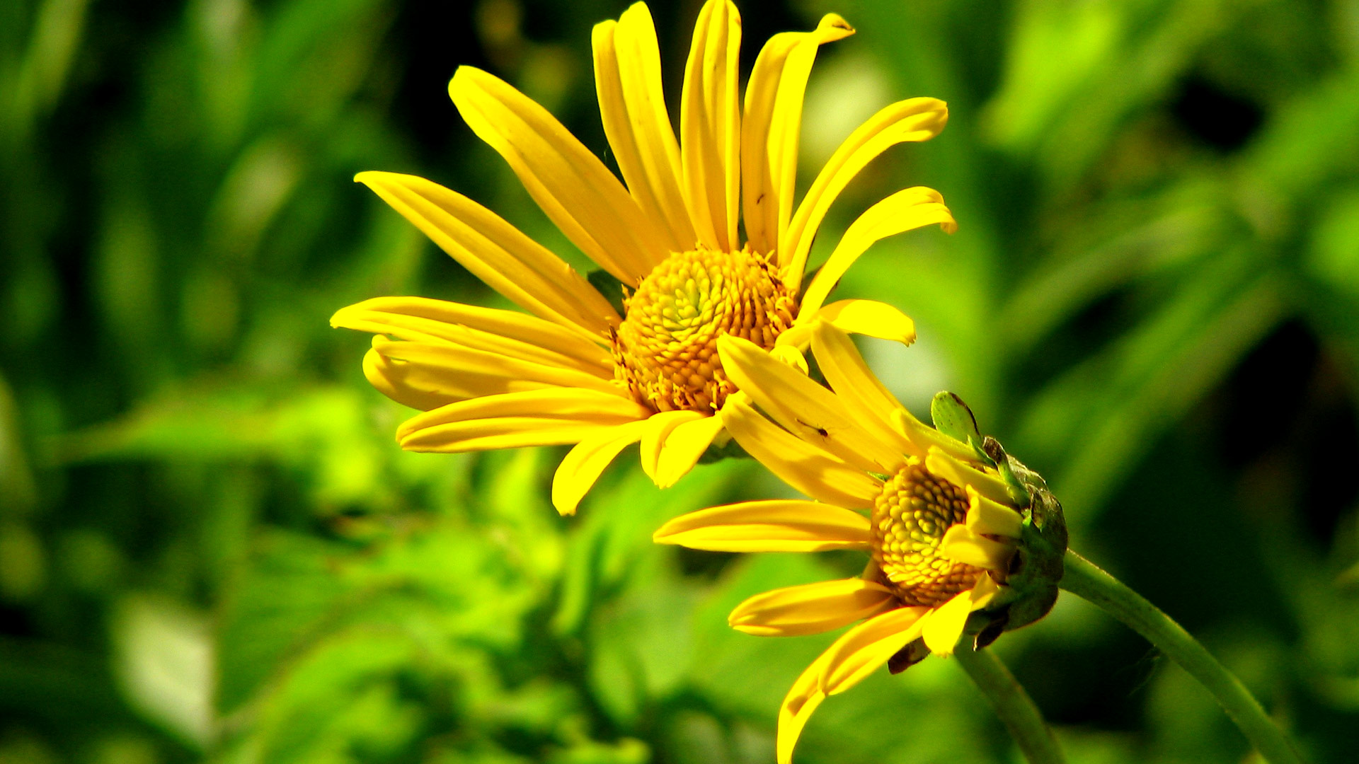 4K Yellow Flowers Wallpapers High Quality   Download Free