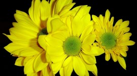 4K Yellow Flowers Wallpaper