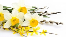4K Yellow Flowers Wallpaper Free