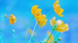 4K Yellow Flowers Wallpaper Gallery