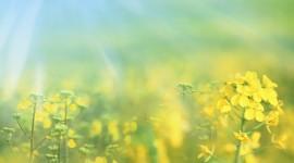 4K Yellow Flowers Wallpaper HQ#2