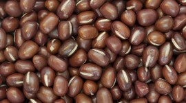 Bean Wallpaper For PC