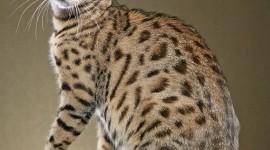 Bengal Cat Wallpaper For IPhone
