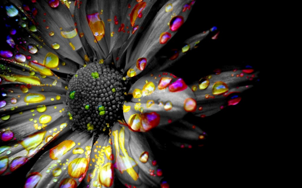 Black Flowers Wallpapers High Quality Download Free