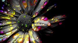 Black Flowers Best Wallpaper