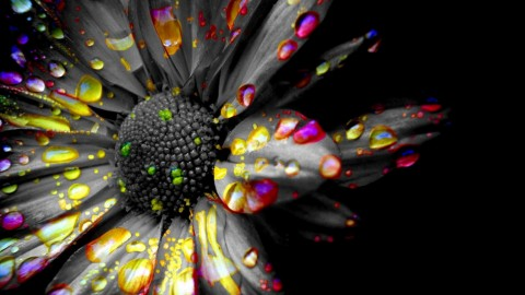 Black Flowers wallpapers high quality