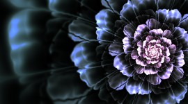 Black Flowers Image