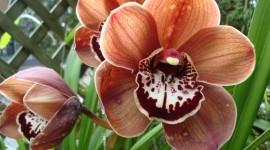 Brown Flowers Wallpaper