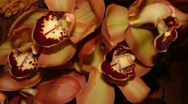 Brown Flowers Wallpaper For Desktop