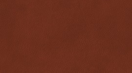 Brown Photo Download