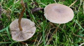 Clitocybe Wallpaper Gallery