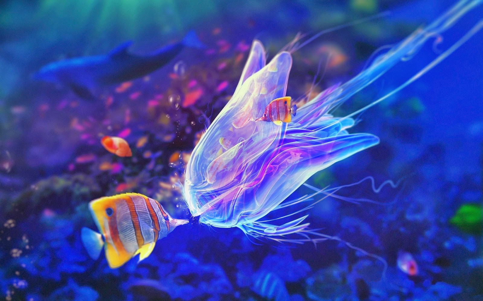 colorful fish wallpapers high quality download free