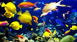 Colorful Fish Best Wallpaper