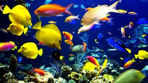 Colorful Fish wallpapers high quality