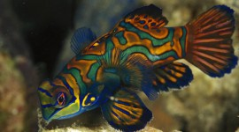 Colorful Fish Desktop Wallpaper