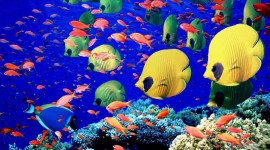 Colorful Fish Desktop Wallpaper HD