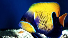 Colorful Fish Photo