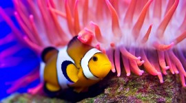 Colorful Fish Photo Download