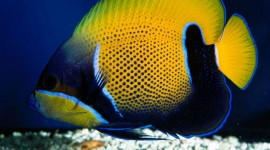 Colorful Fish Photo Free