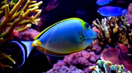 Colorful Fish Wallpaper For Desktop