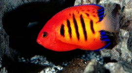 Colorful Fish Wallpaper For PC