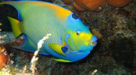 Colorful Fish Wallpaper Free